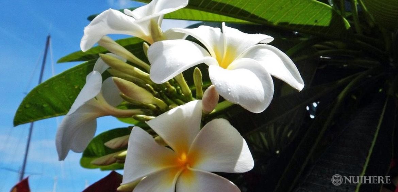 ハワイアンジュエリー人気モチーフプルメリアNUIHERE(ヌイヘレ)AROHAアロハ